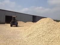 Cần bán 200 tấn cùi bắp xay