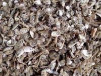 Đầu cá cơm khô, khô cá tạp, cá trích số lượng lớn