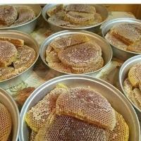 Cung cấp Mật ong rừng tự nhiên Đắk Lắk