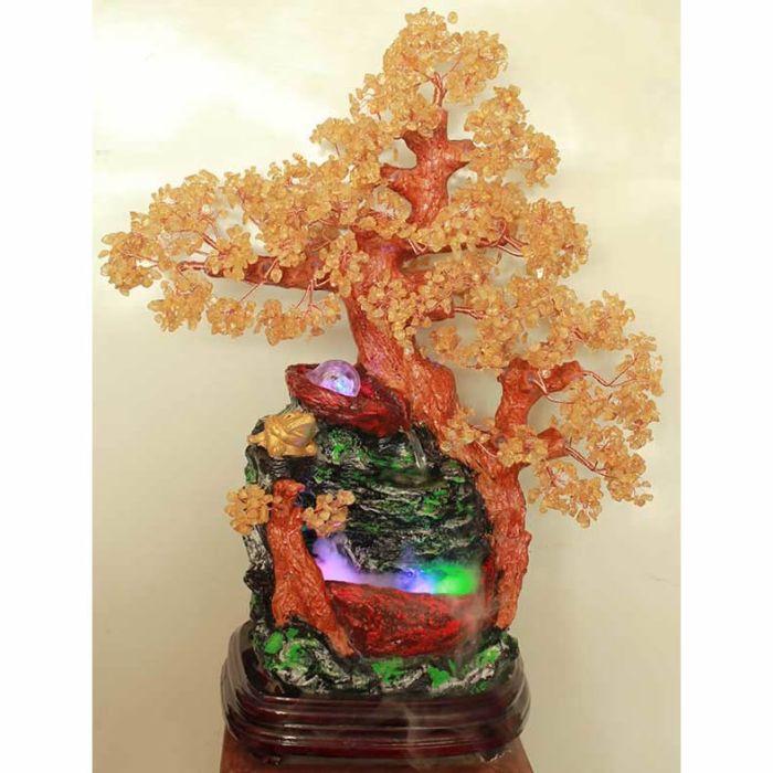 (Cần mua): Mua giống phong thủy, cây nội thất các loại.