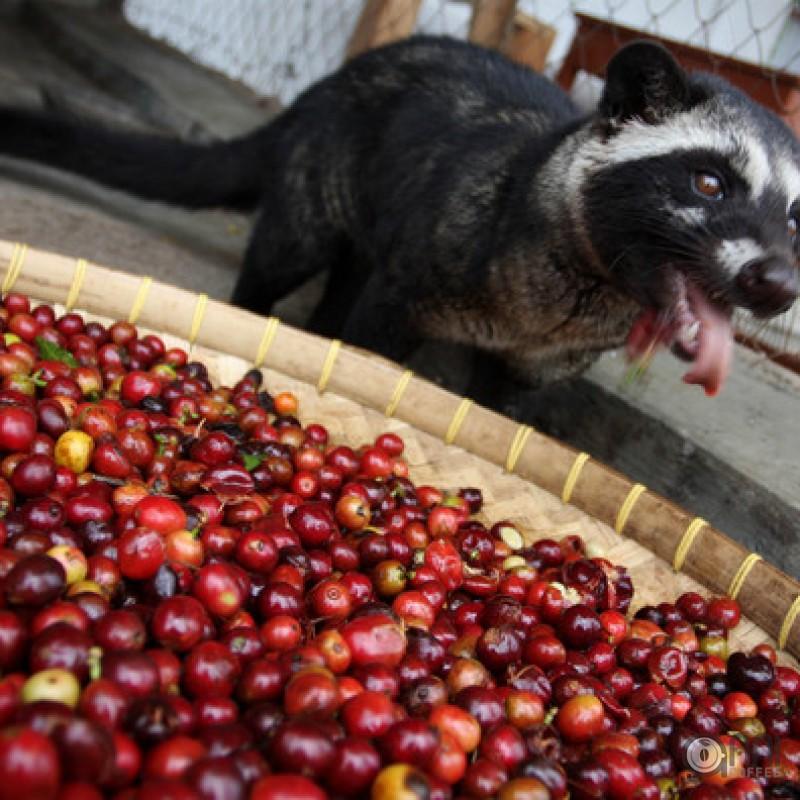 Cà phê chồn Arabica mộc - Cà phê hạt