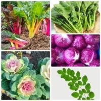 cải cầu vồng, cải bó xôi, hoa bắp cải, bắp cải tím, chùm ngây