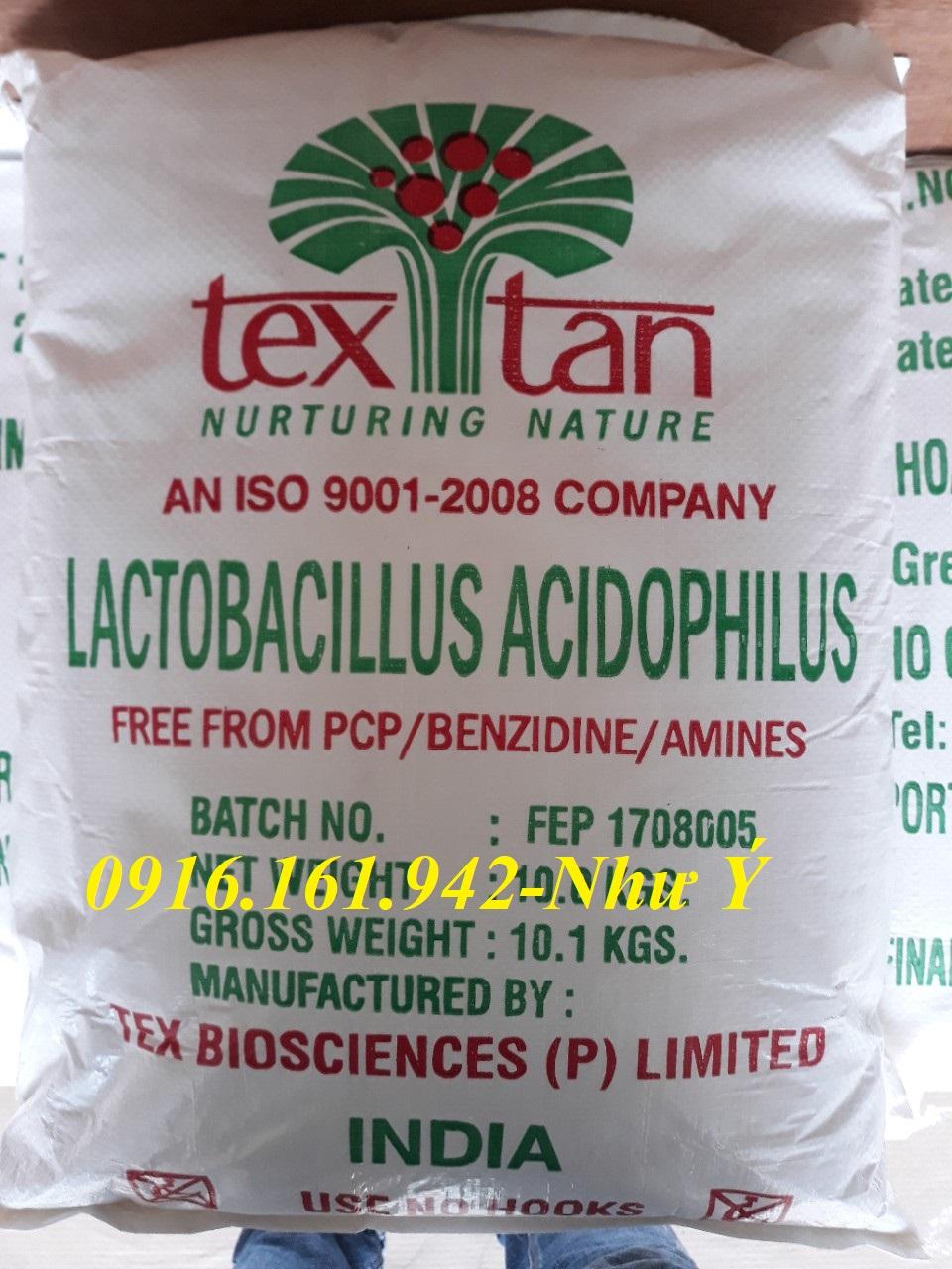 LACTOBACILLUS ACIDOPHILUS: Men Vi Sinh Đường Ruột