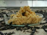 Trứng ấu trùng ruồi lính đen