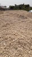 Cung cấp cùi bắp nguyên, xay sấy khô