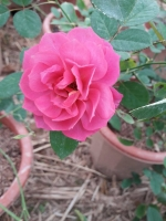 Hồng nội, hồng ngoại siêu đẹp