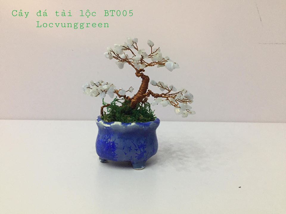 Locvunggreen, cây tài lộc, cây may mắn