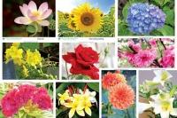Một số loài hoa có tác dụng chữa bệnh