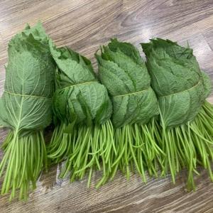 Rau củ giống Hàn Vietgap cho nhà hàng , siêu thị
