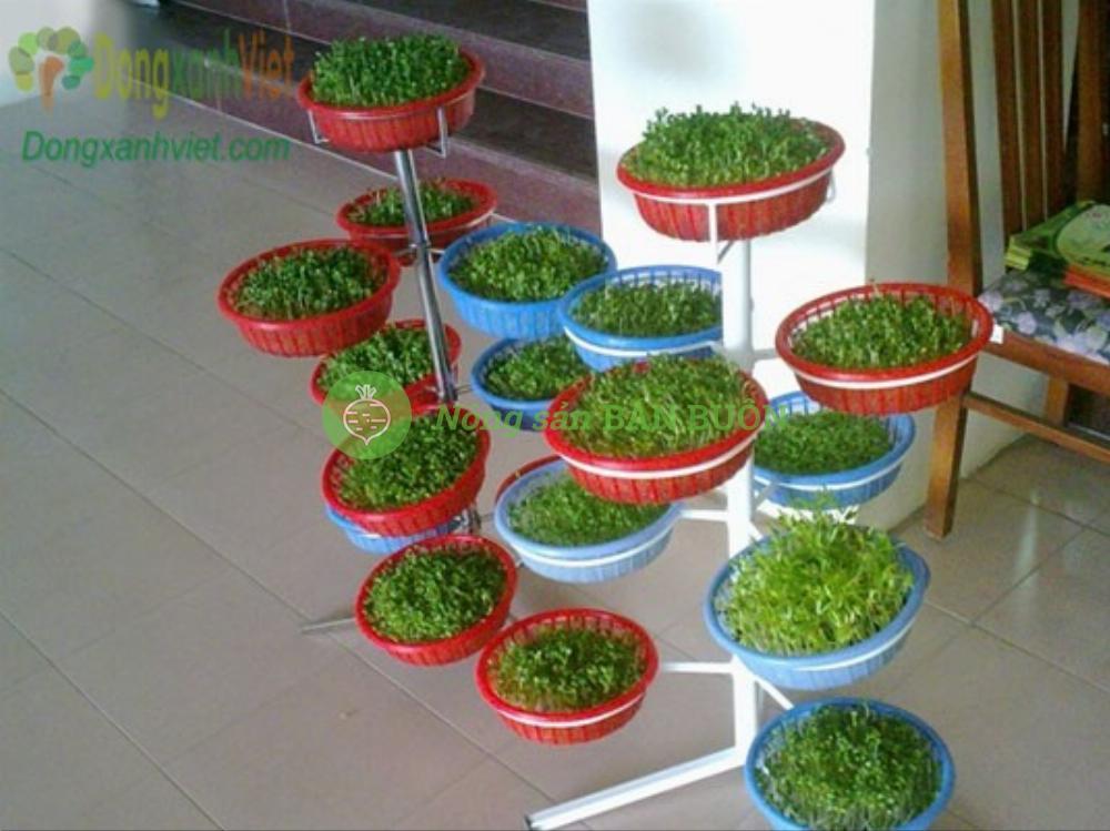 Bộ trồng rau mầm hình cây