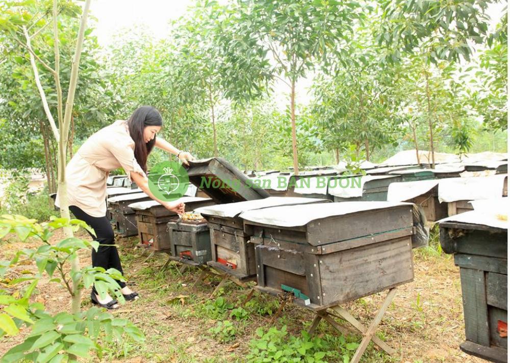 Mật ong cao cấp Hương Giang BestFarm