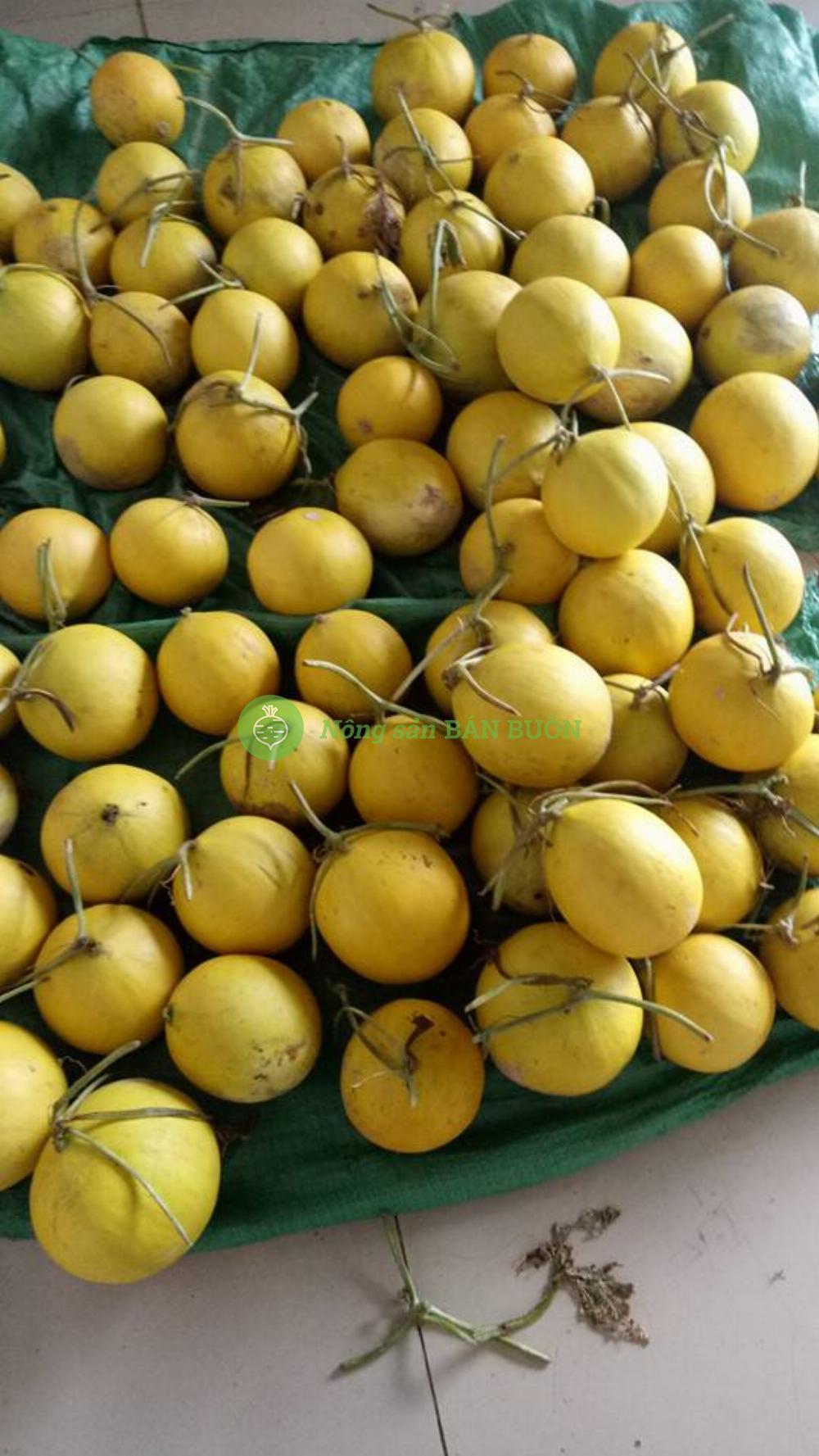 dưa vàng Thái Lan siêu ngọt
