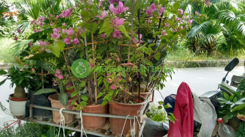chào ngày mới với hoa tươi, cây đẹp