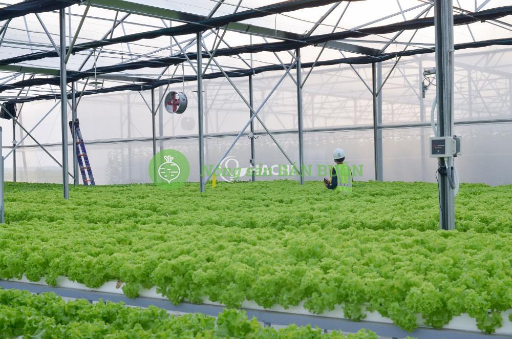 Tư vấn thi công hệ thống nông nghiệp thông minh