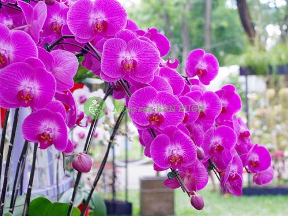 Vườn Lan Phạm Quỳnh