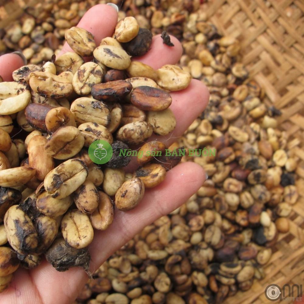 100% Cà phê chồn Robusta mộc - Cà phê hạt