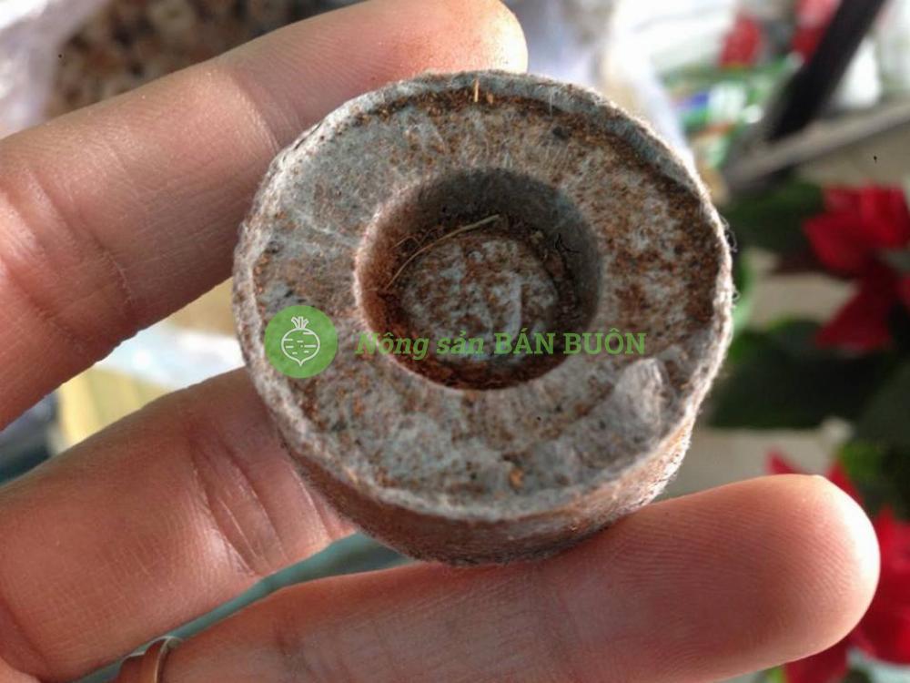 Viên nén xơ dừa ươm hạt Batrivina