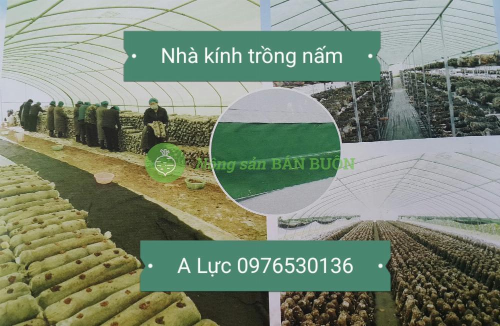 Bàn màng nilon lợp nhà trồng nấm công nghệ cao