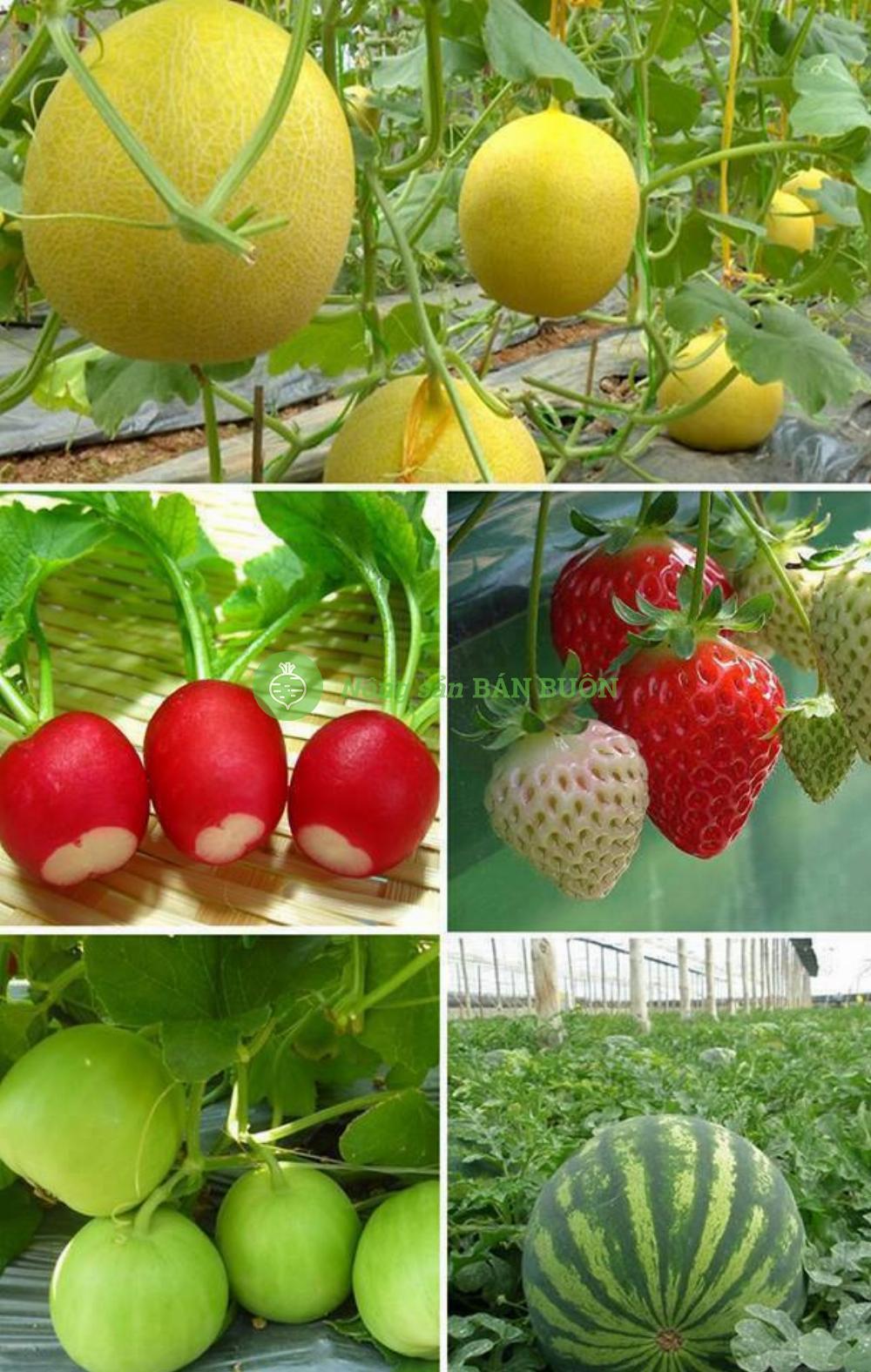 dưa lưới, củ cải đỏ, dâu tây đỏ, dưa lê lam ngọc, dưa hấu