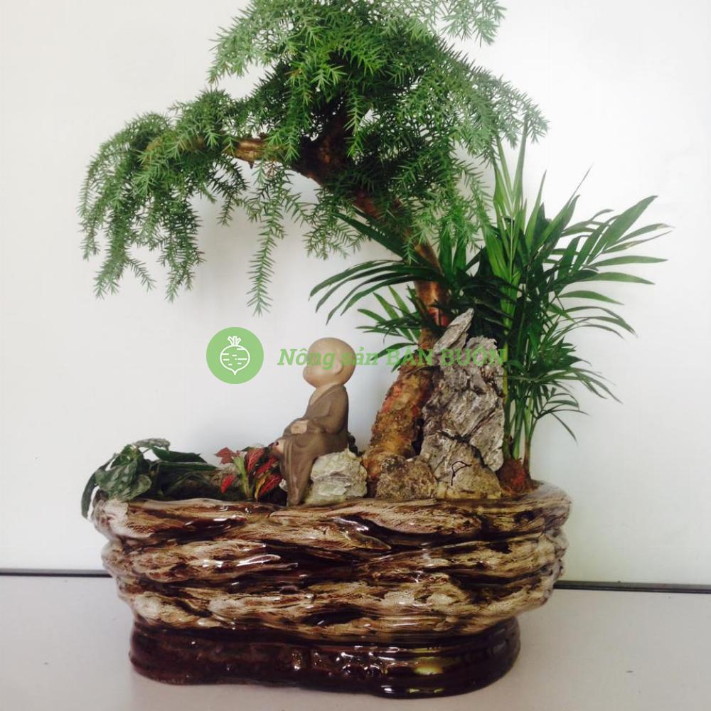 cây phong thủy, cây nội thất