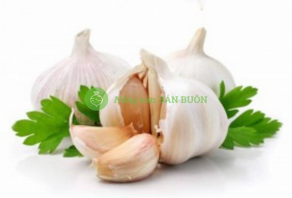 Bột tỏi garlic extract