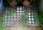Khay nhựa ươm cây TOKAI KASEI NHẬT BẢN 84 LỖ - ƯƠM CÂY TIỆN LỢI, TIẾT KIỆM DIỆN TÍCH, BẢO VỆ MÔI TRƯỜNG