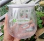 Bình trồng thủy sinh - Phụ kiện không thể thiếu cho ngôi nhà của bạn