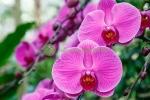 Sự tích loài hoa lan