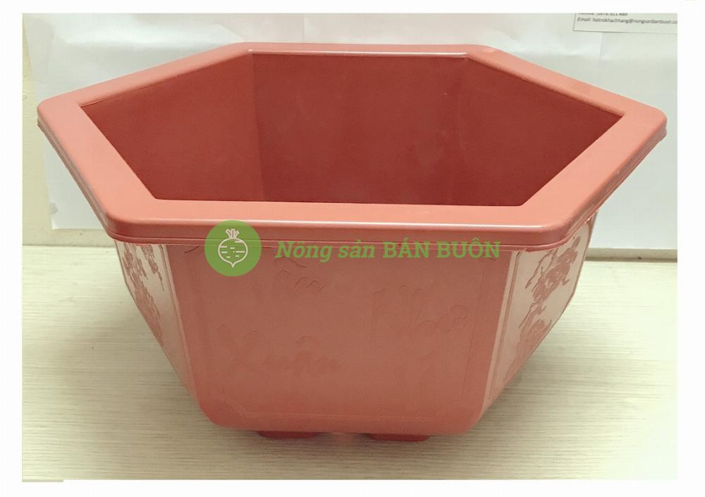 Chậu Nhựa Lục Giác Bonsai 350x210 Bình Thuận, Trồng Hoa, Cây Cảnh