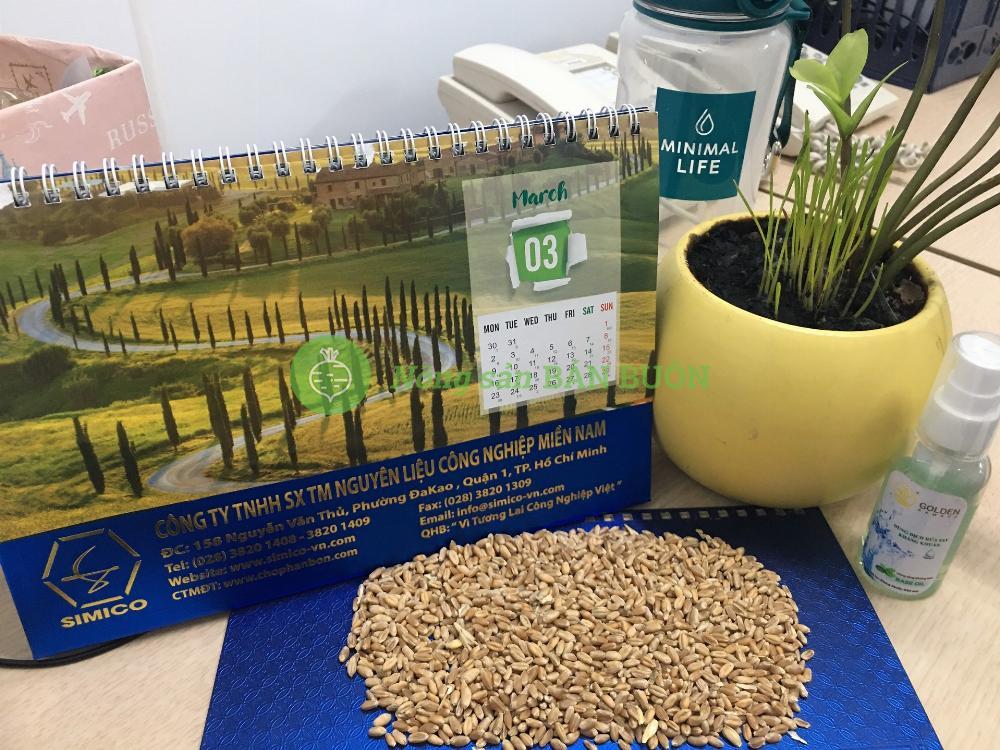 Lúa mì nhập khẩu - Nguyên liệu sản xuất Thức ăn chăn nuôi