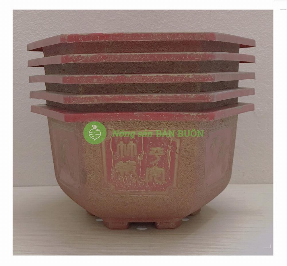 5 Chậu Nhựa Lục Giác Bon Sai CN 250x150 Thạch Nhũ Đỏ - Chậu nhựa trồng hoa, cây cảnh!